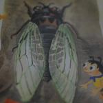 Molting like a Cicada (or Self-Publishing)